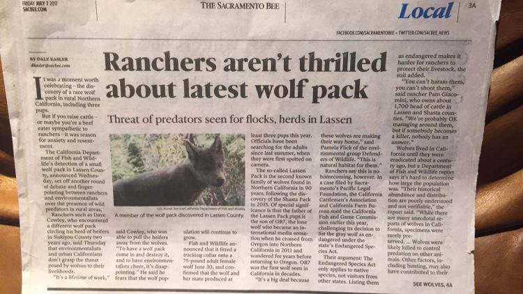 protect california wolves, protect the wolves, wolves, wolf, lassen pack