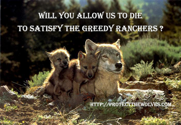 sacred resource protection zone, protect the wolves, protect wyoming wolves, protect yellowstone wolves
