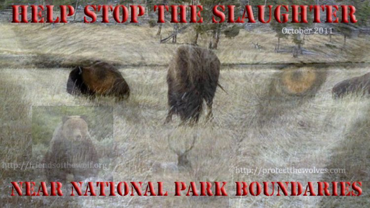 protect the wolves, sac red resource protection zone, grizzlies targeted, stop the bison slaughter