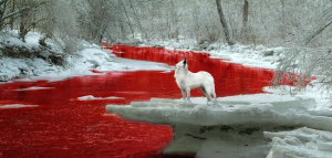 Idaho Wolf hunt contest