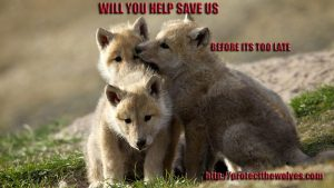 Protect The Wolves today