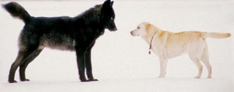 protect the wolves, sacred resource protection zone