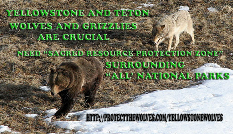 protect yellowstone wolves, protect teton wolves, sacred resource protection zone
