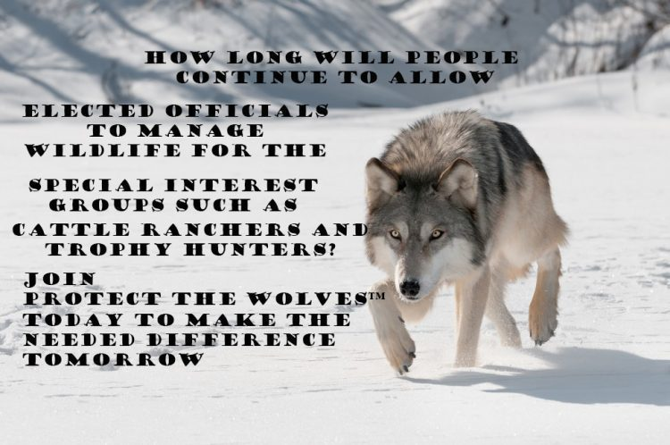 protect the wolves, protect mexican gray wolves, phoenix