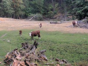 overgrazing, ban grazing allotments