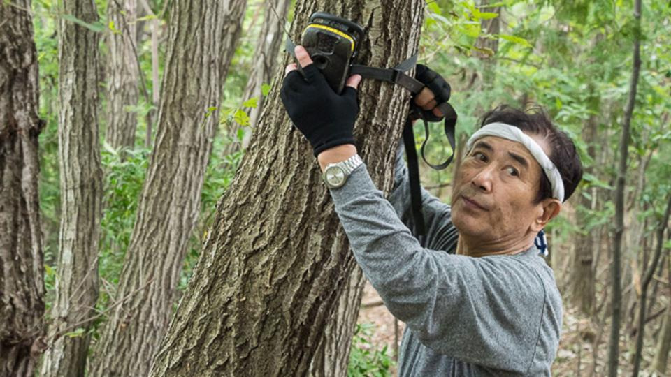 Hiroshi Yagi fixes a camera trap to a tree (Credit: Hiroshi Yagi)