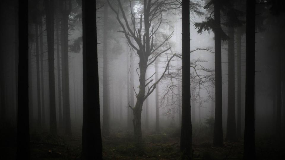 Mist in a dark woodland (Credit: Getty Images)